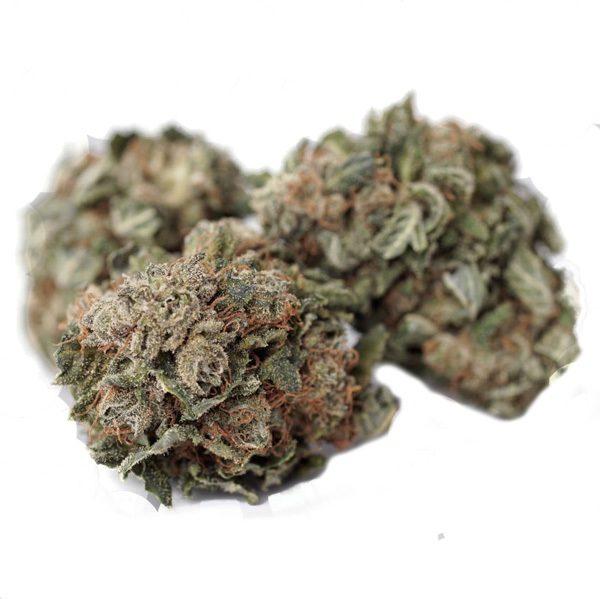 Gorilla Glue CBD - Cannabis light - Mary Jane Jesolo